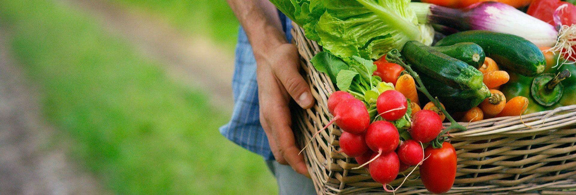 Mann hält Korb mit gesunden Gemüse für eine Zahngesunde Ernährung